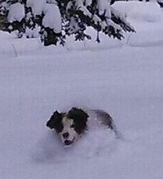 Dolly in deep snow