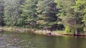 flowage.shoreline2.640