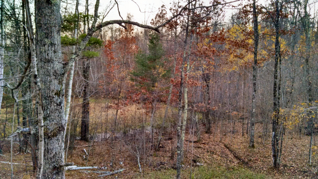 View from my deer stand late October