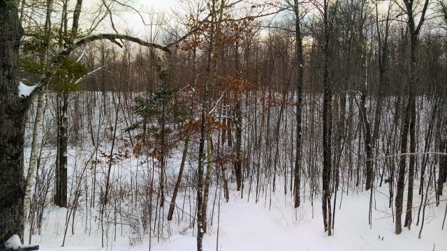 View from my deer stand in the northwoods of Wisconsin